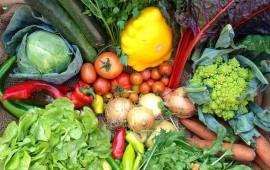 Thực phẩm tốt cho đường tiêu hóa